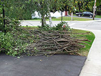 Branches Pickup