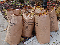 Leaves Pickup