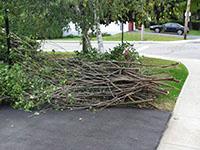 Collecte des branches
