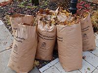 Collecte des feuilles