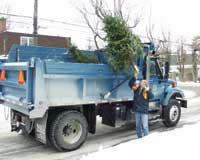 Collecte des arbres de Noël